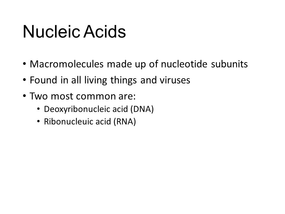 Nucleic Acids Macromolecules made up of nucleotide subunits