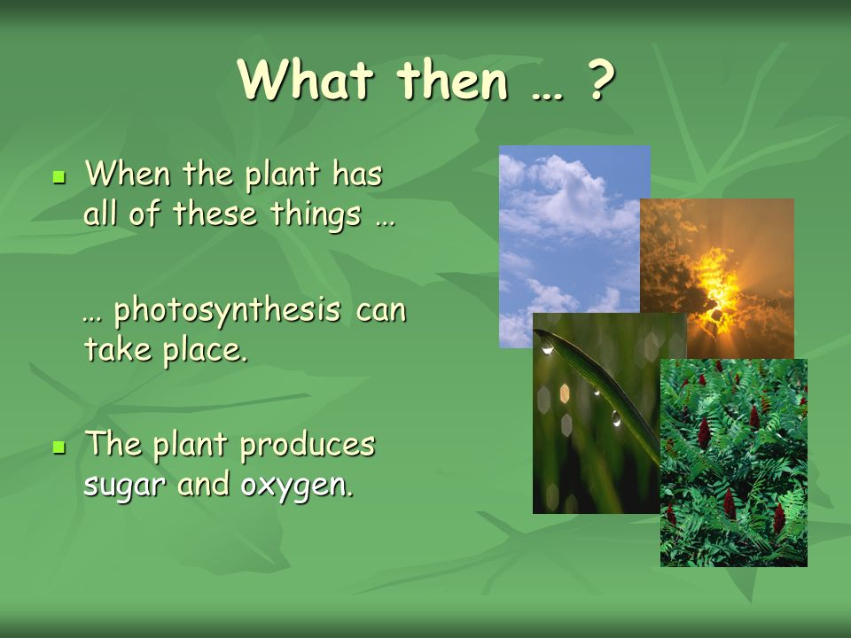 What then … When the plant has all of these things …