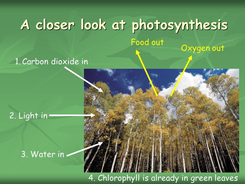 A closer look at photosynthesis