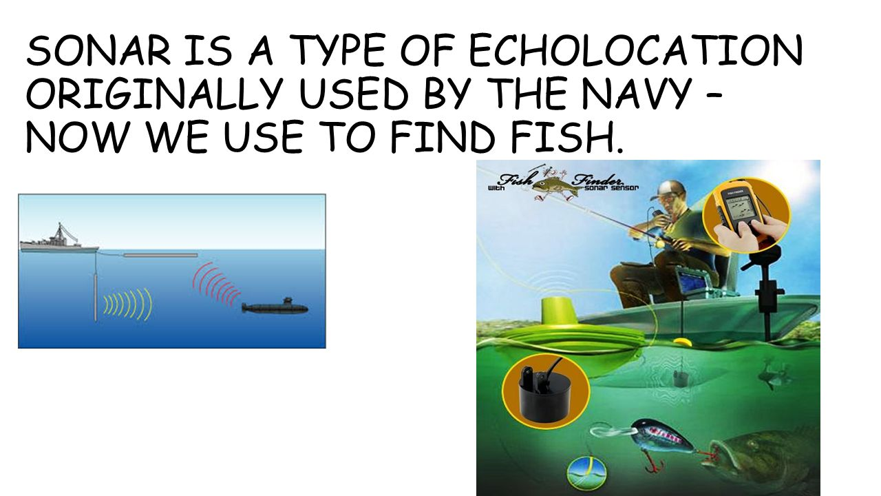 SONAR IS A TYPE OF ECHOLOCATION ORIGINALLY USED BY THE NAVY – NOW WE USE TO FIND FISH.