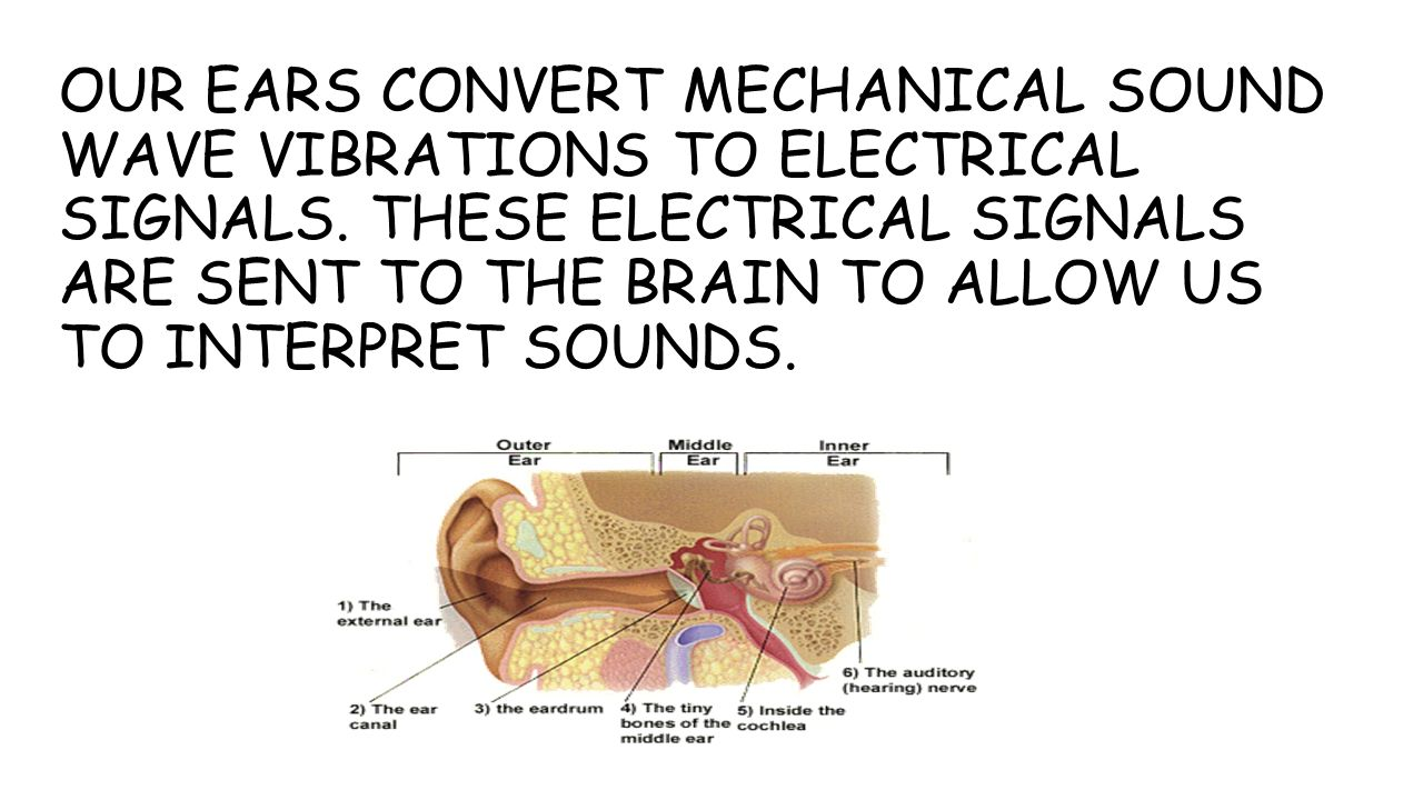OUR EARS CONVERT MECHANICAL SOUND WAVE VIBRATIONS TO ELECTRICAL SIGNALS.