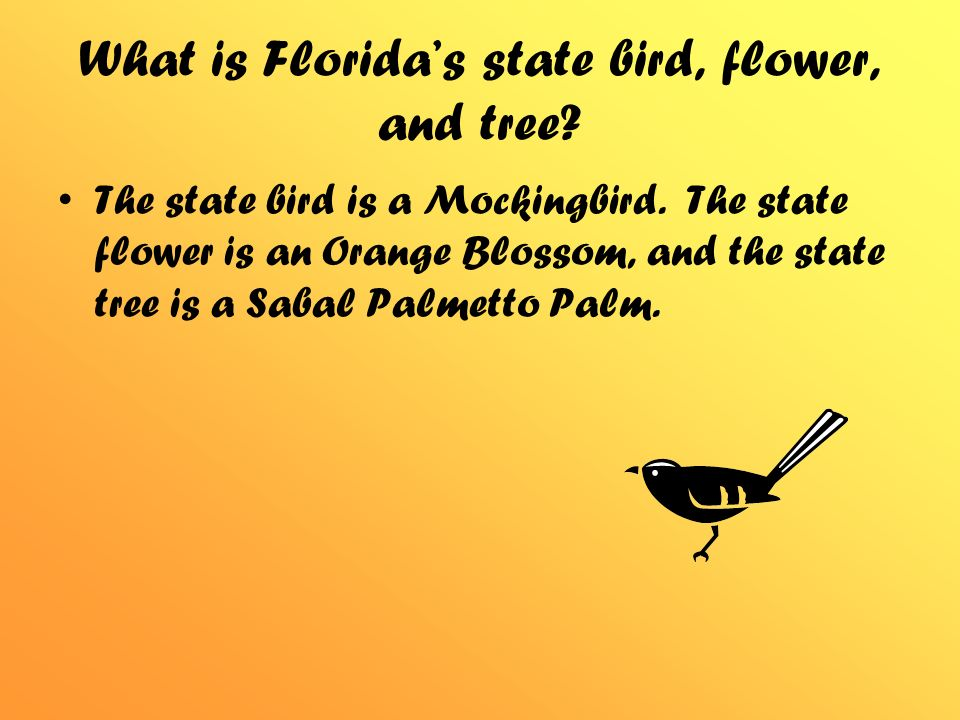 What Is Floridas State Bird Flower And Tree