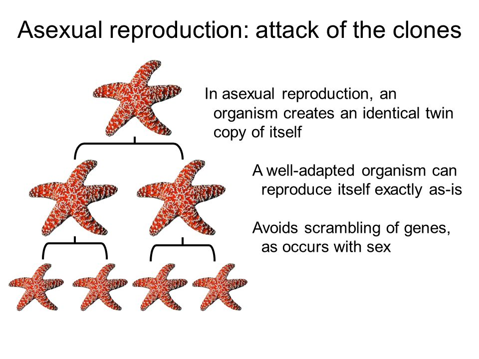 Asexual reproduction is cloning