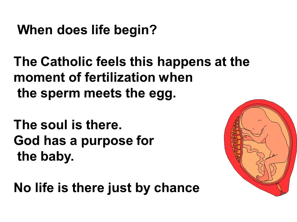 When does life begin The Catholic feels this happens at the moment of fertilization when. the sperm meets the egg.