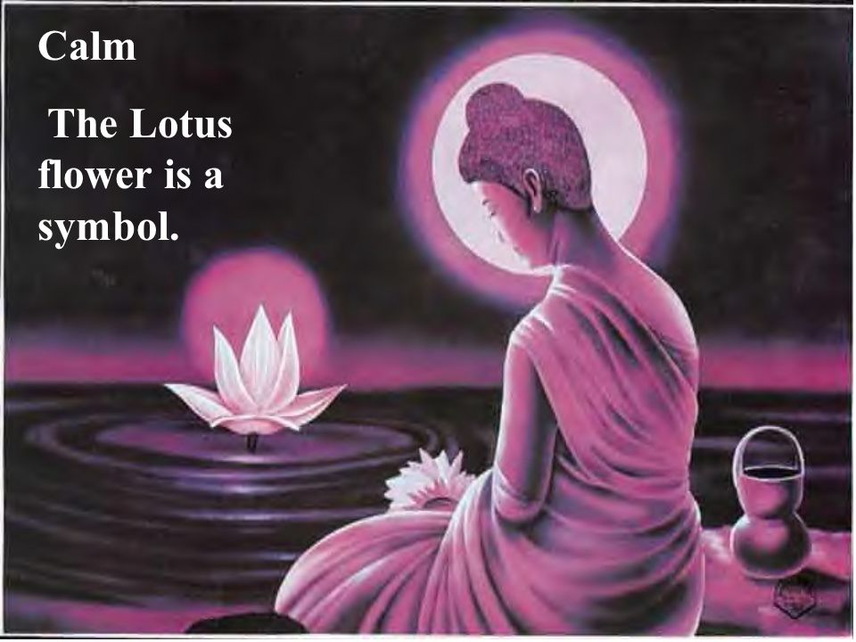 Calm The Lotus flower is a symbol.