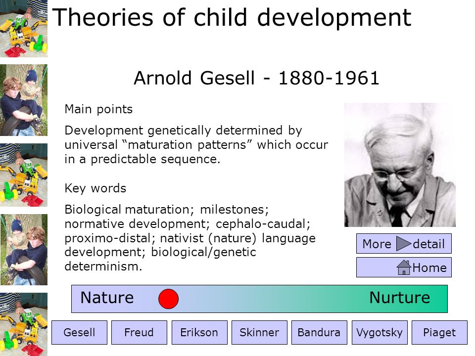 Maturational theory arnold gesell