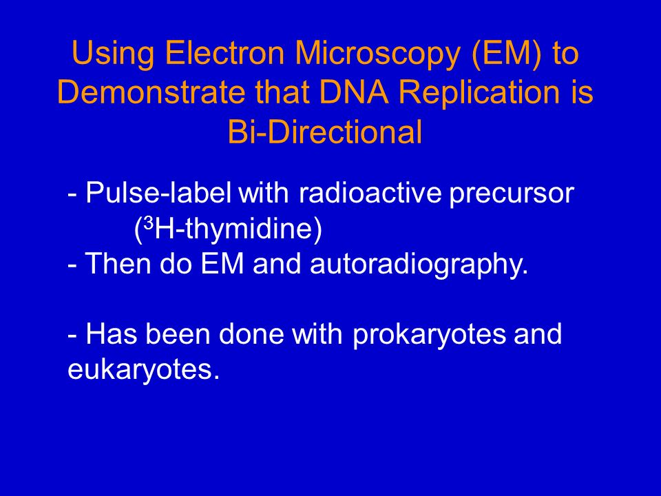 dna replication in prokaryotes and eukaryotes pdf