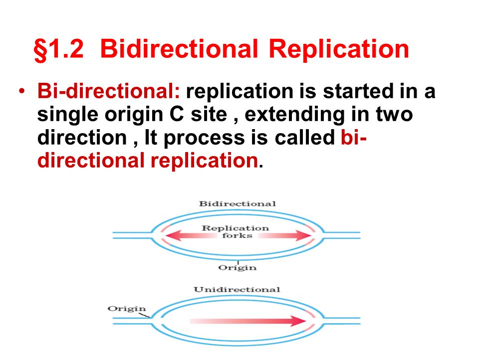 Characteristics Of Replication Ppt Video Online Download
