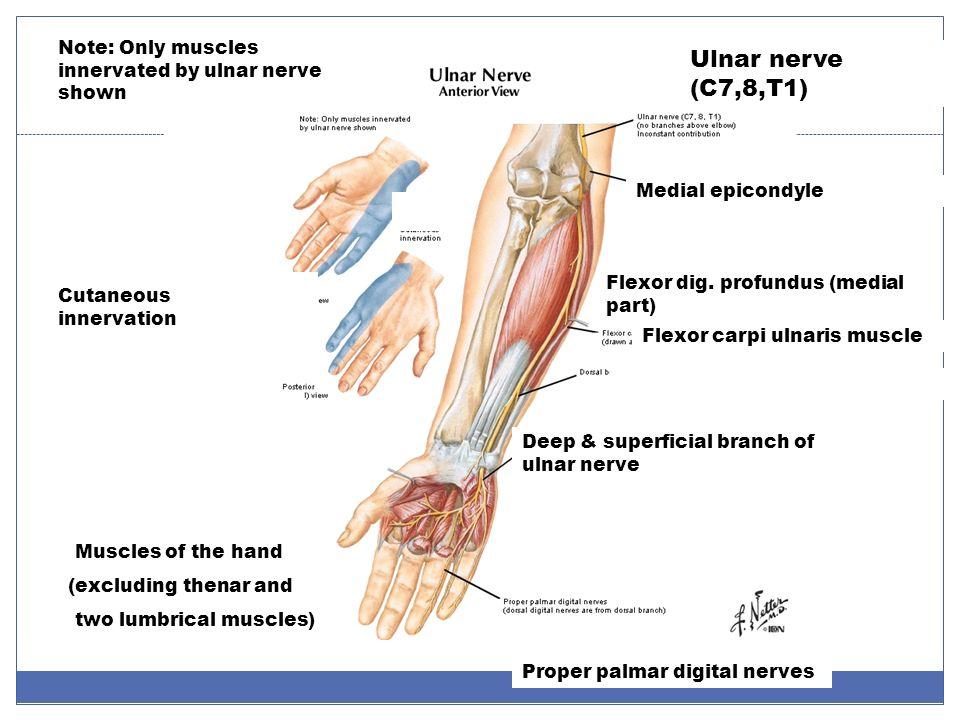 Upper Limb, part I Shoulder, Arm, and Axilla. - ppt download