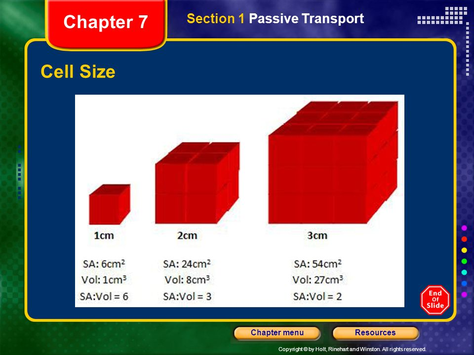 3 Chapter 7 Section 1 Pive Transport Cell Size