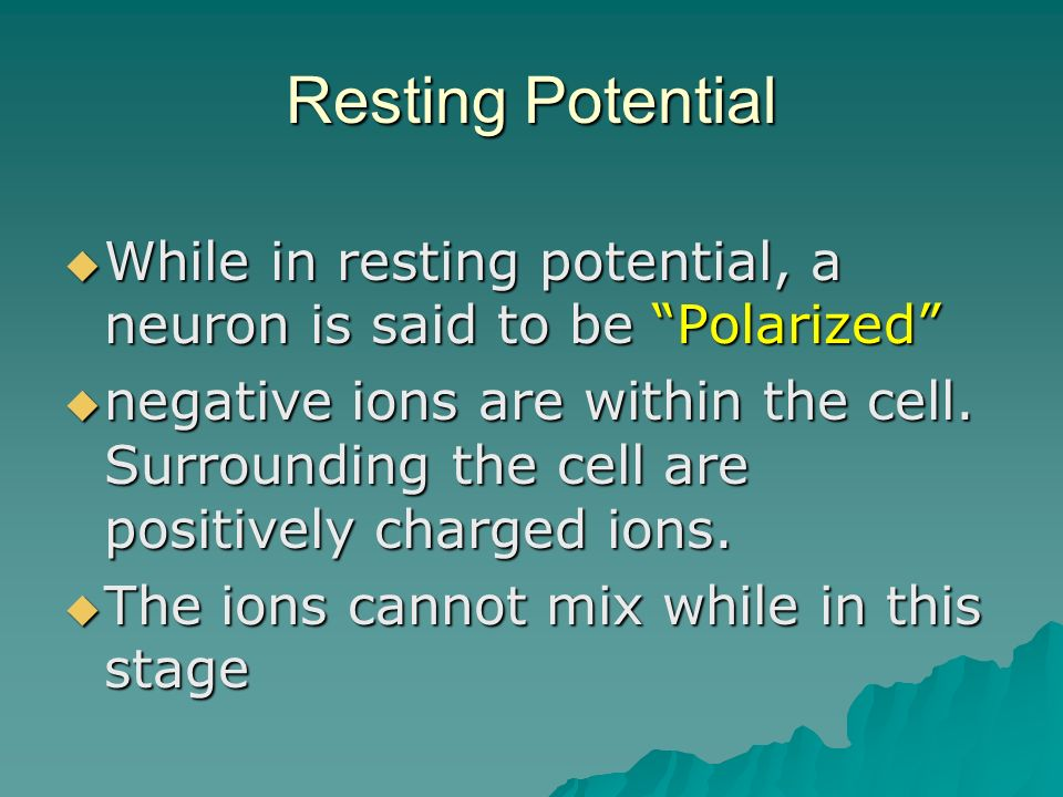 Resting Potential While in resting potential, a neuron is said to be Polarized