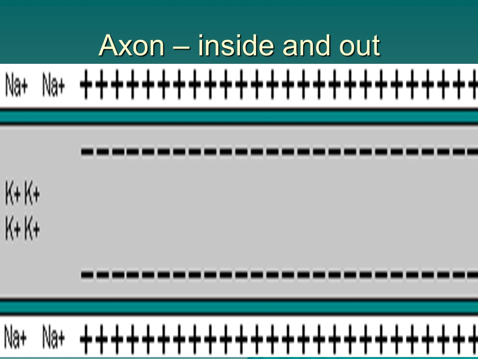 Axon – inside and out