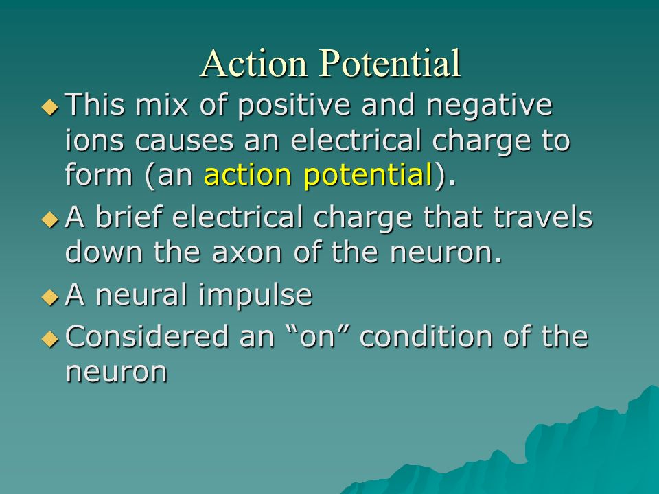 Action Potential This mix of positive and negative ions causes an electrical charge to form (an action potential).