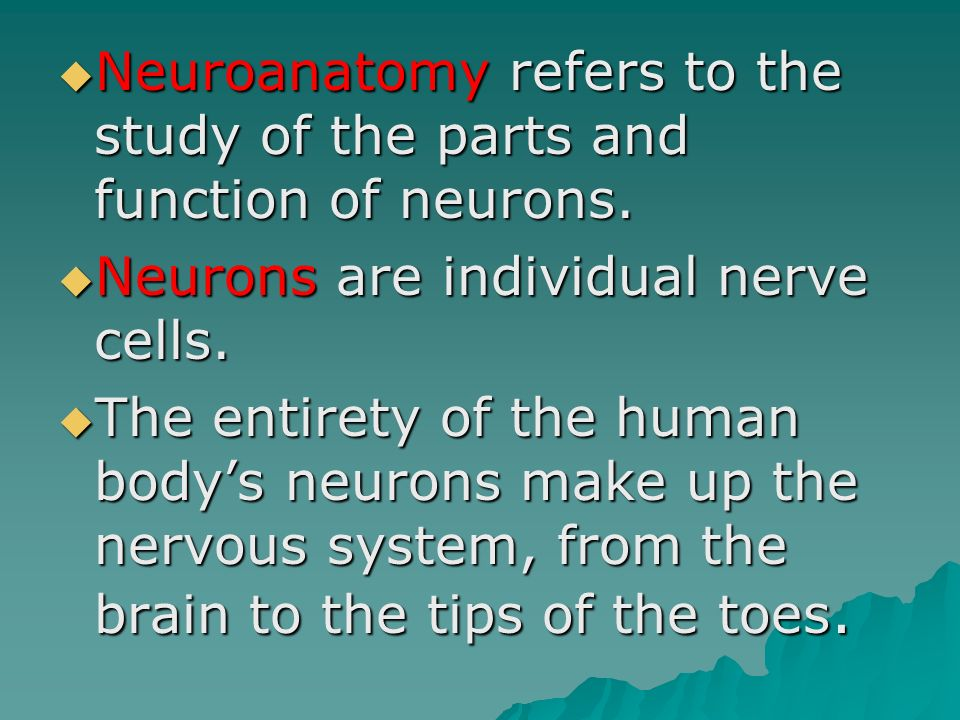Neuroanatomy refers to the study of the parts and function of neurons.