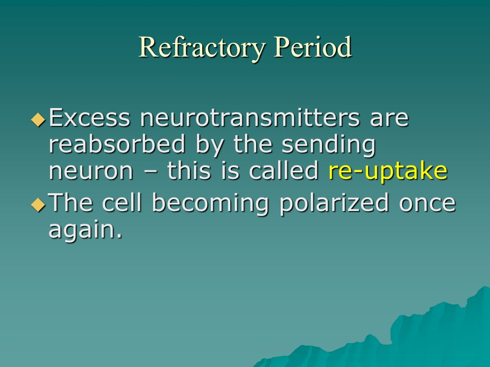 Refractory Period Excess neurotransmitters are reabsorbed by the sending neuron – this is called re-uptake.