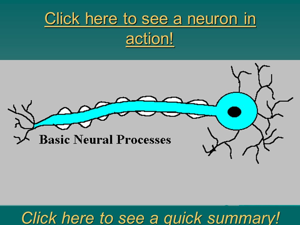 Click here to see a neuron in action!