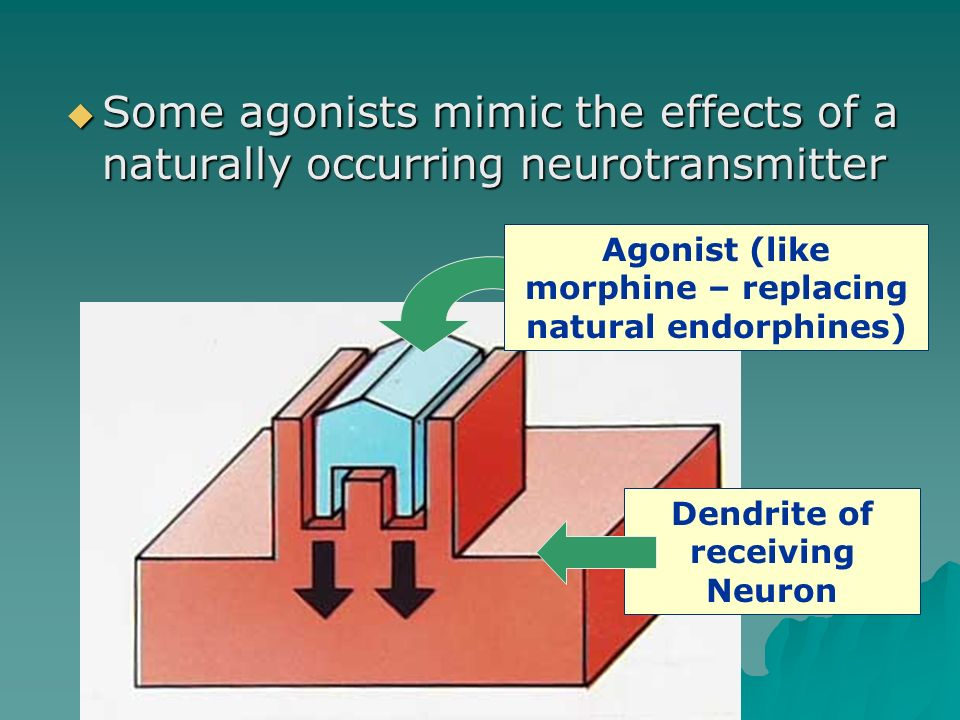 Some agonists mimic the effects of a naturally occurring neurotransmitter
