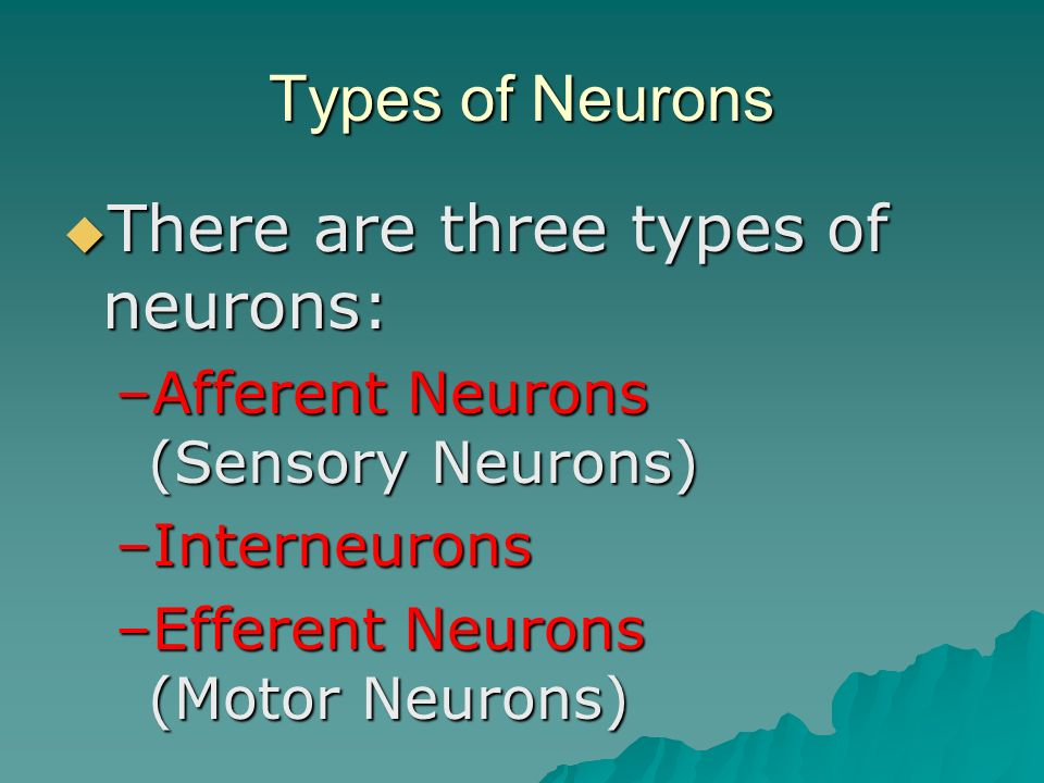 There are three types of neurons: