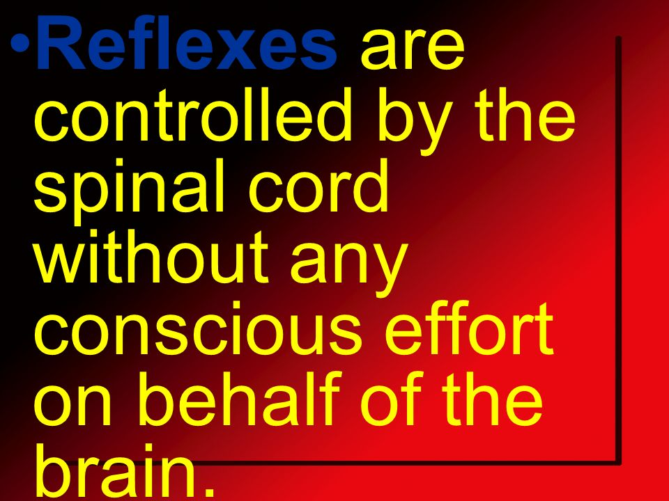 Reflexes are controlled by the spinal cord without any conscious effort on behalf of the brain.