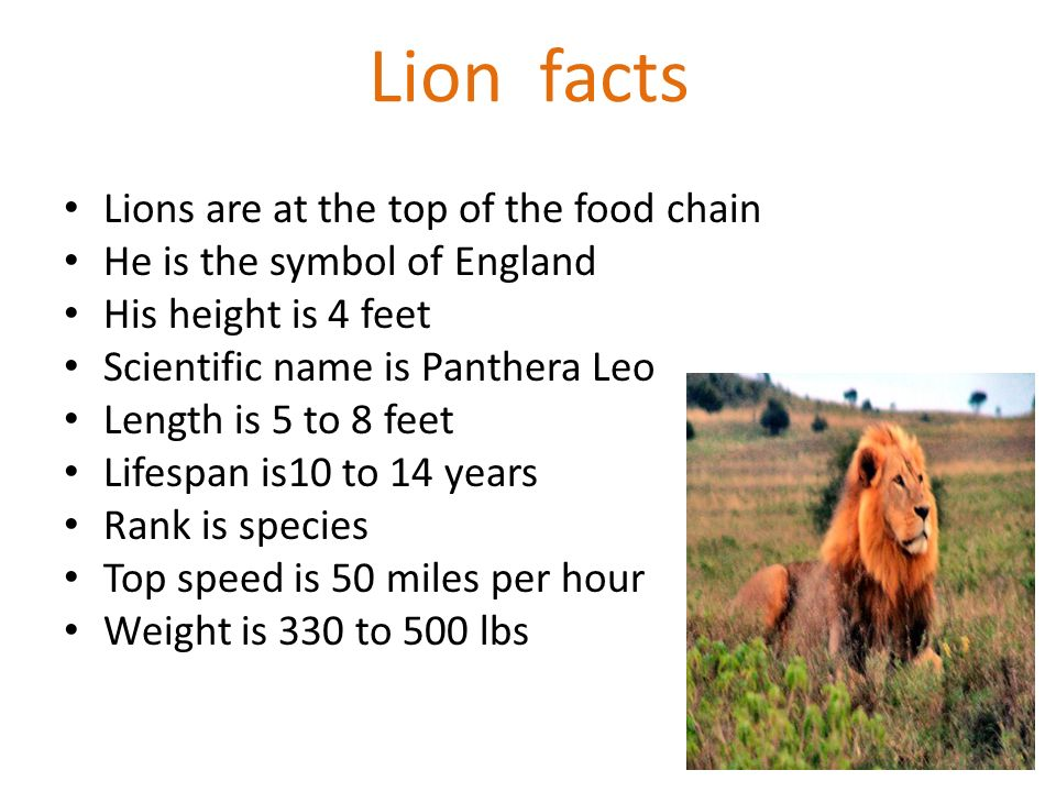 What Is The Top Of The Food Chain Called