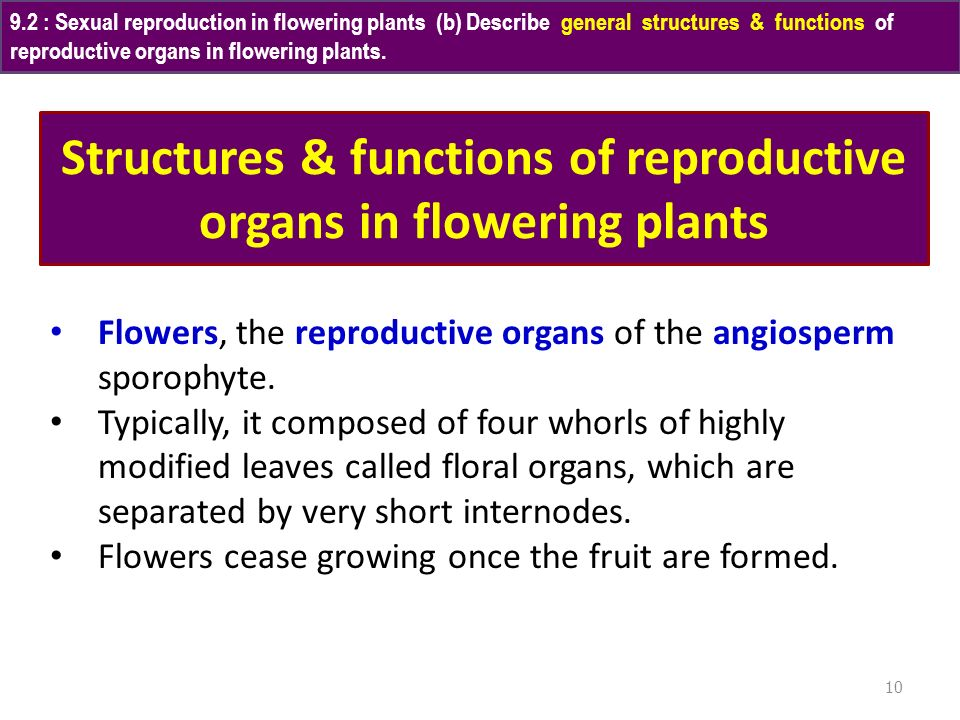 Structures & functions of reproductive organs in flowering plants