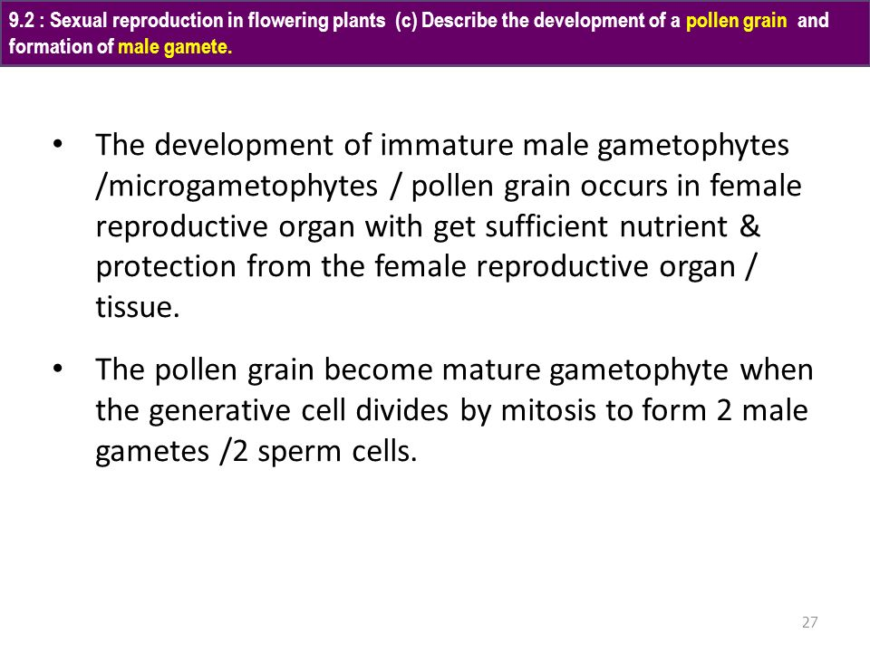 9.2 : Sexual reproduction in flowering plants (c) Describe the development of a pollen grain and formation of male gamete.