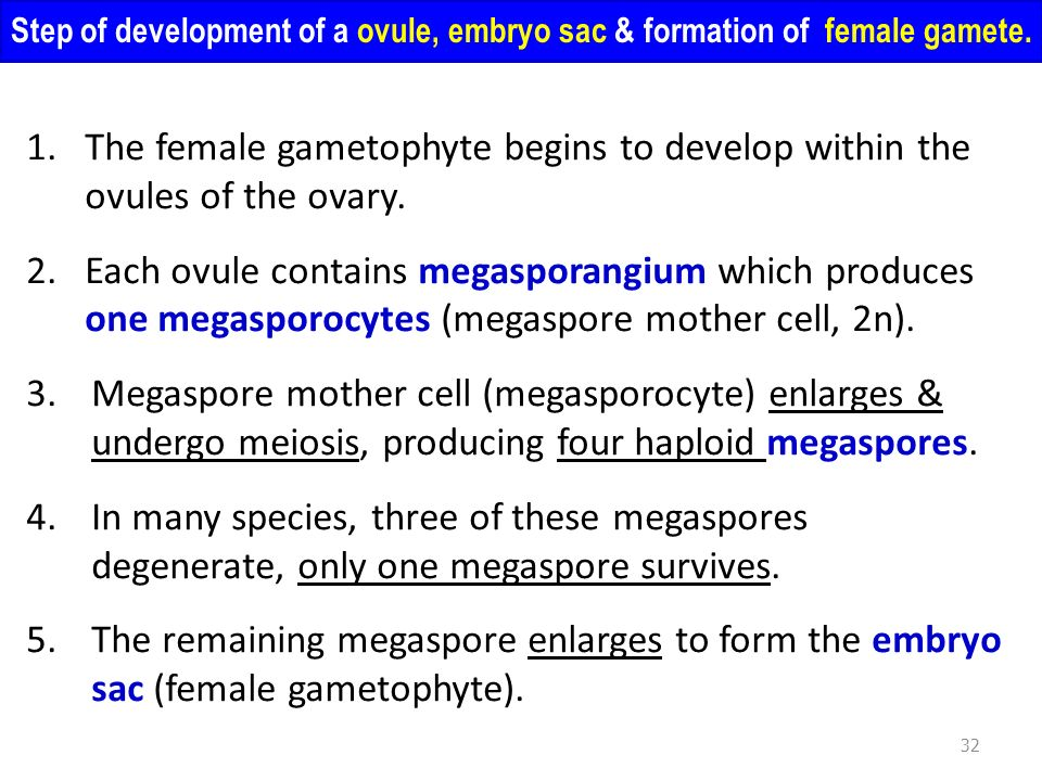 Step of development of a ovule, embryo sac & formation of female gamete.