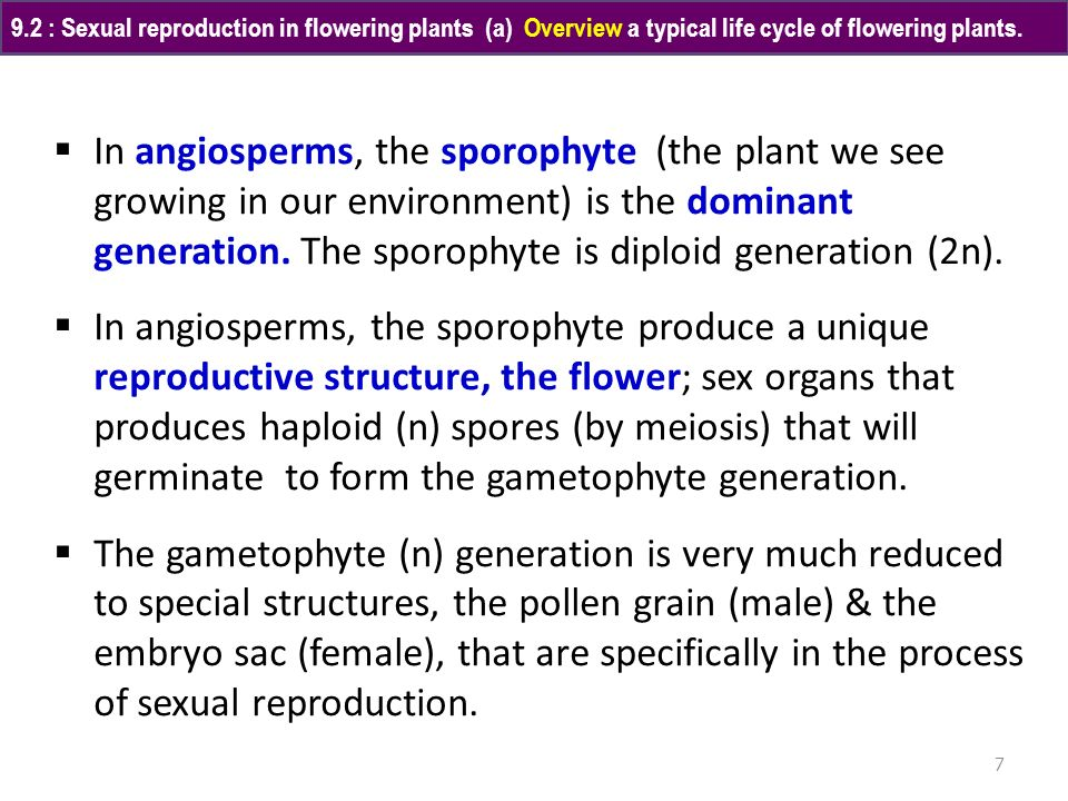 9.2 : Sexual reproduction in flowering plants (a) Overview a typical life cycle of flowering plants.
