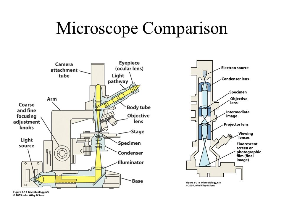 To do electron microscopy lecture ppt download 8 microscope comparison ccuart Gallery