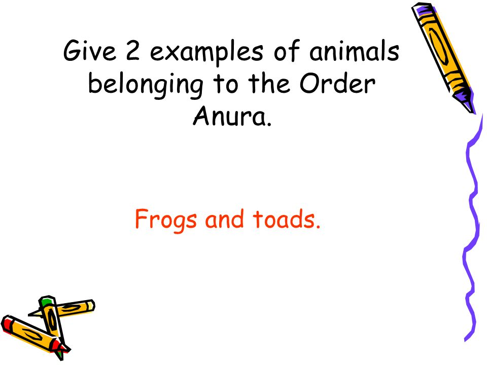 Order anura examples.