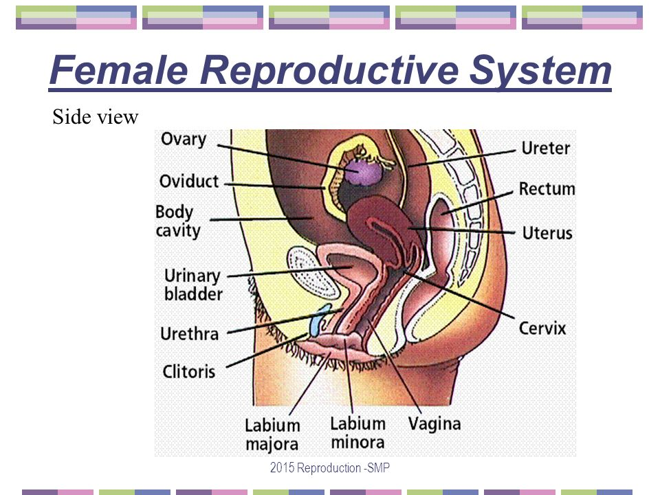 Asexual reproduction definition yahoo finance