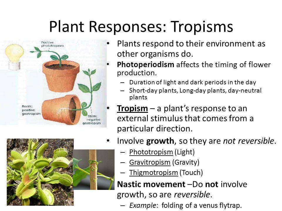 general characteristics of angiosperms pdf