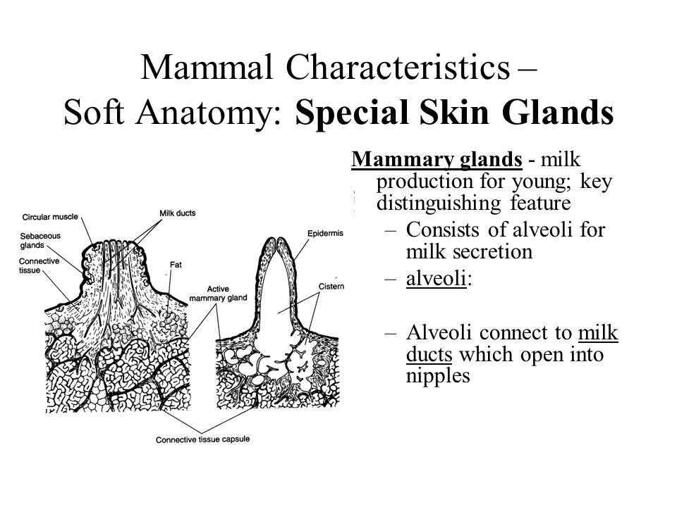 the characteristics types and anatomy of mammals Marine mammals meet the five characteristics of a mammal they breathe air through lungs, are warm-blooded, have hair (at some time during life), bear live young, and produce milk to nurse their young.