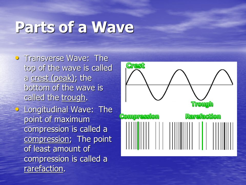 Parts of a Wave Transverse Wave: The top of the wave is called a crest (peak); the bottom of the wave is called the trough.