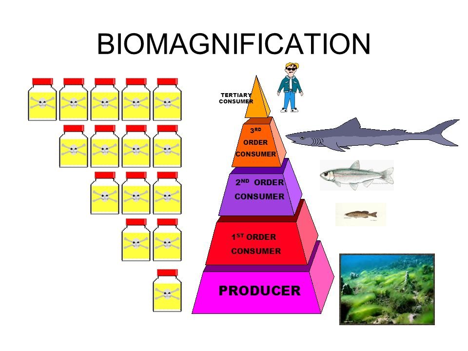 2 biomagnification