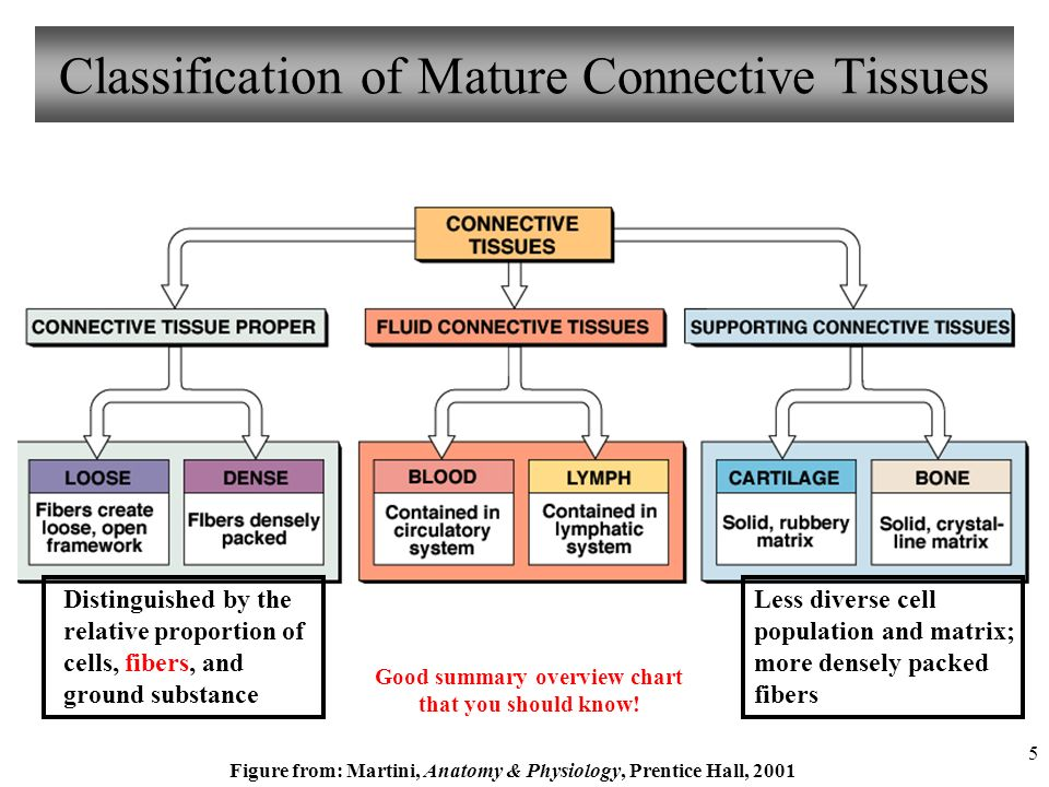 Mature connective tissue