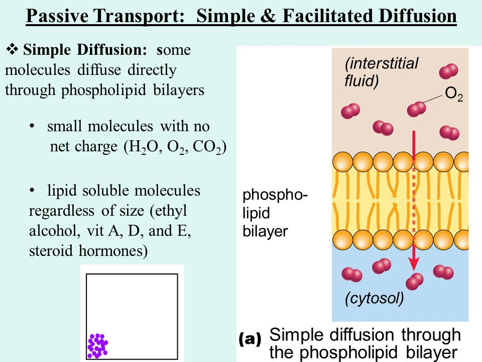 cell passive transport webquest The cell: passive transport diffusion by barbara liang in this animated object, learners view molecules as they collide and move between two different solutions.