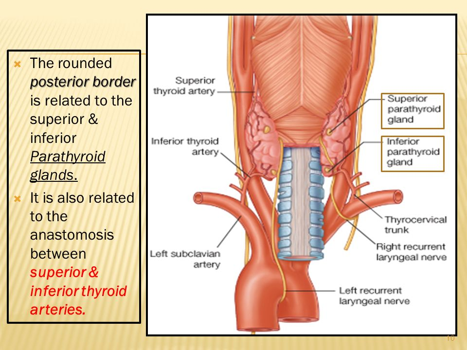 THYROID & PARATHYROID By Prof . Saeed Abuel Makarem & - ppt video ...