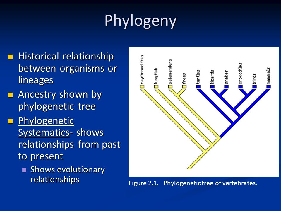 Comparative Anatomy Concepts & Premises - ppt video online download