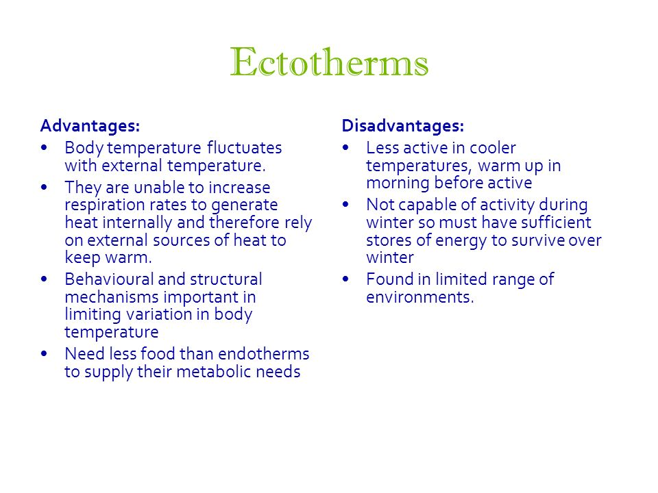 advantages of being ectothermic