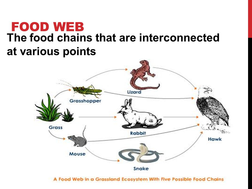 What Is Ecology The Study Of How Organisms Interact With The