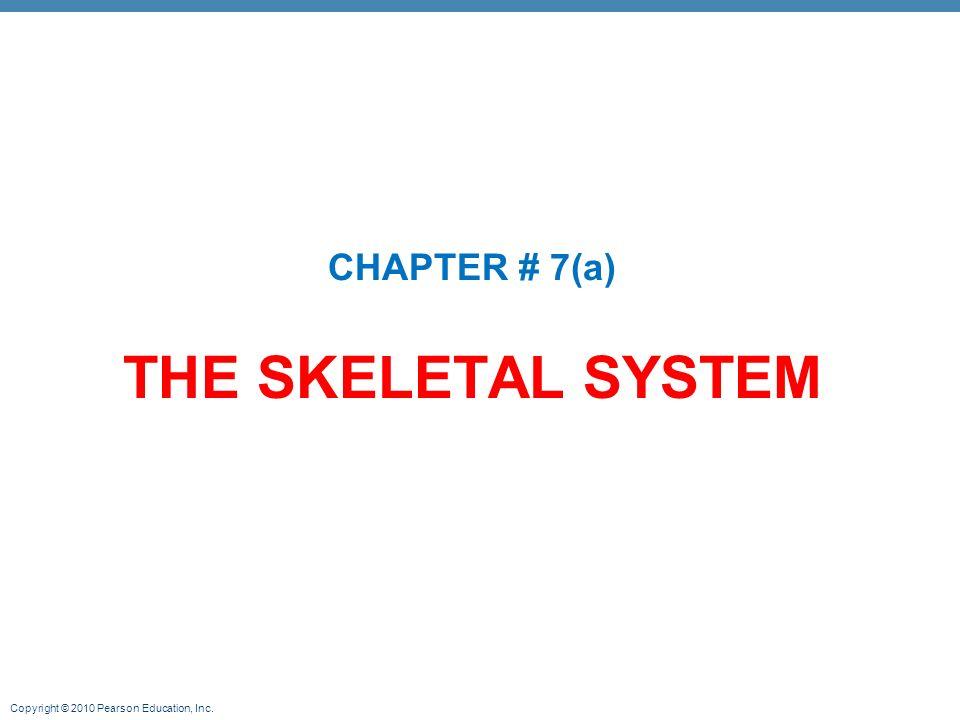 CHAPTER # 7(a) THE SKELETAL SYSTEM. - ppt video online download