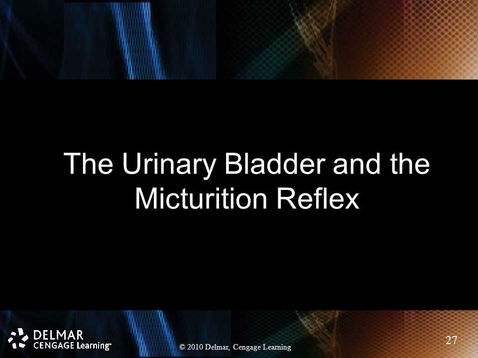 The Urinary Bladder and the Micturition Reflex