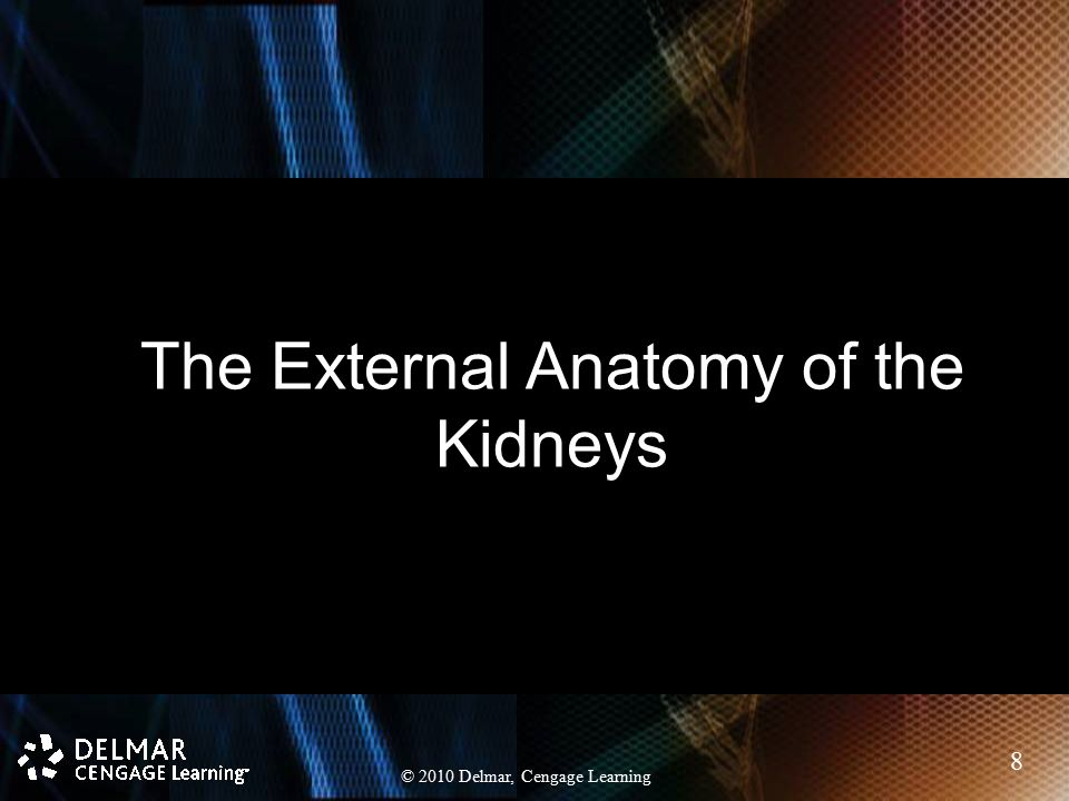 The External Anatomy of the Kidneys