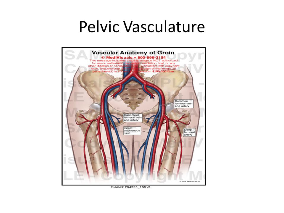 Anatomy of the Pelvis in Computed Tomography - ppt video online download