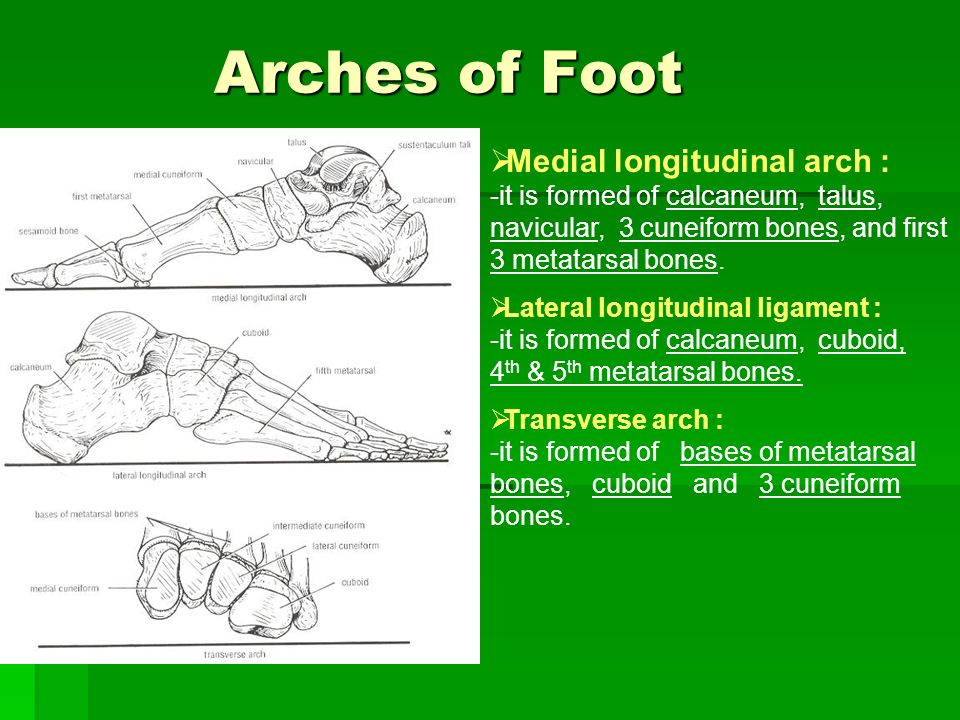 Function of Arches of the Foot : - ppt video online download