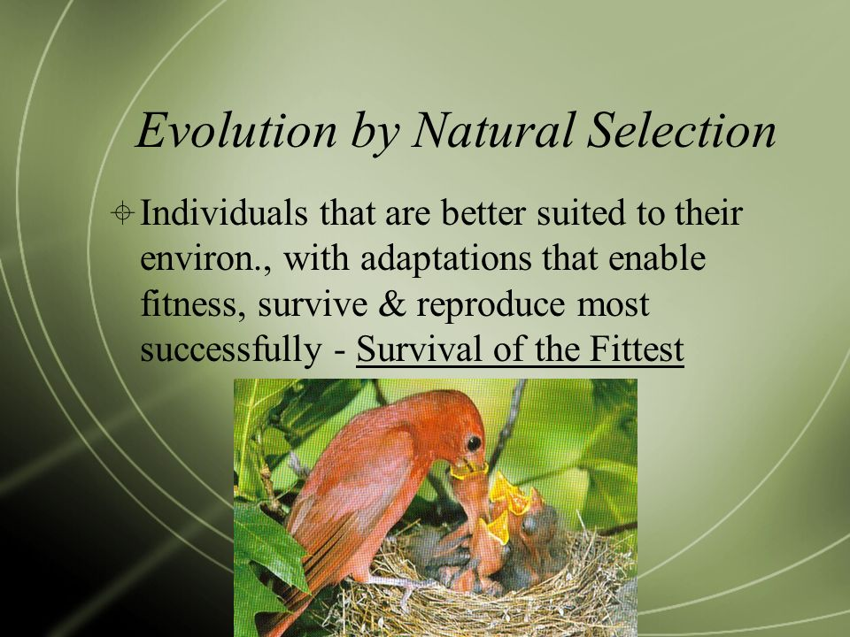 Evolution by Natural Selection