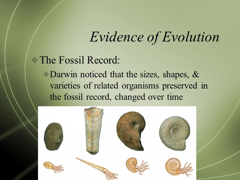 Evidence of Evolution The Fossil Record: