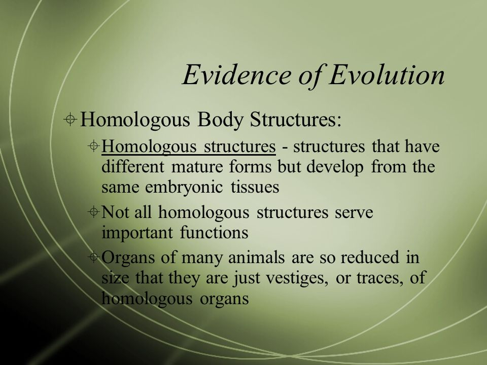 Evidence of Evolution Homologous Body Structures: