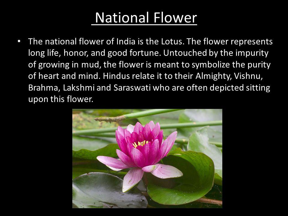 Indias National Symbols Ppt Video Online Download